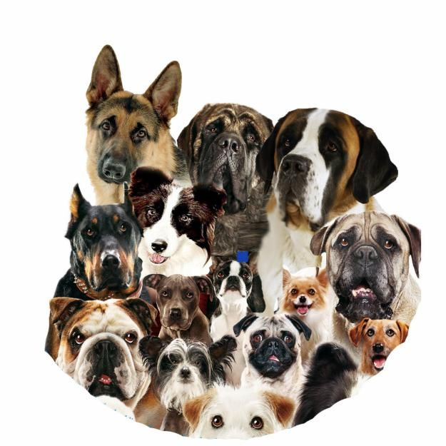 different types of dogs in the united states | 1341822330_412043416_1-ALL-TYPES-DOG-BREEDS-all-over-india