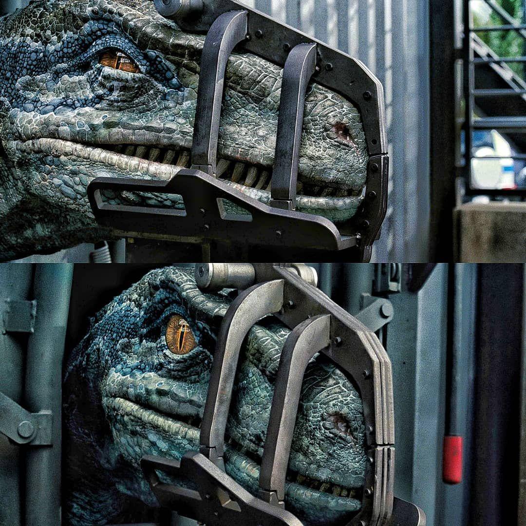"Jurassic Park/World fan! :D on Instagram: ""What is your favorite color????? #jurassicpark #jurassicworld #fallenkingdom #rexy #trex #blue #dinosaurs #velociraptor #islanublar"" #jurassicparkworld"