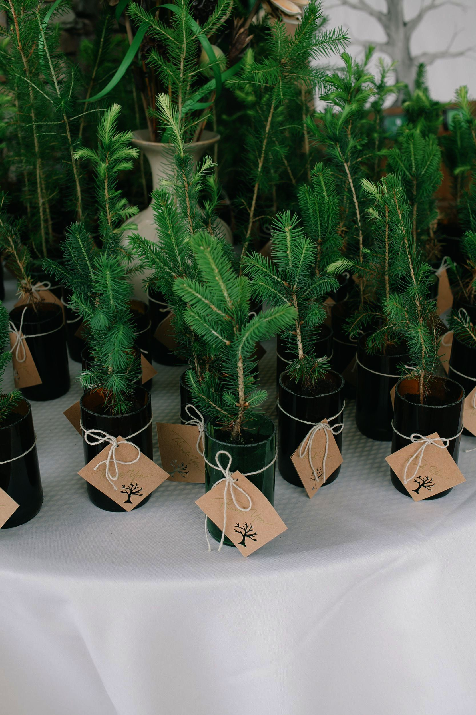 Wedding Invitations Jobs Among Wedding Crashers Rule Book Tree Themed Wedding Plant Wedding Favors Tree Wedding Favors