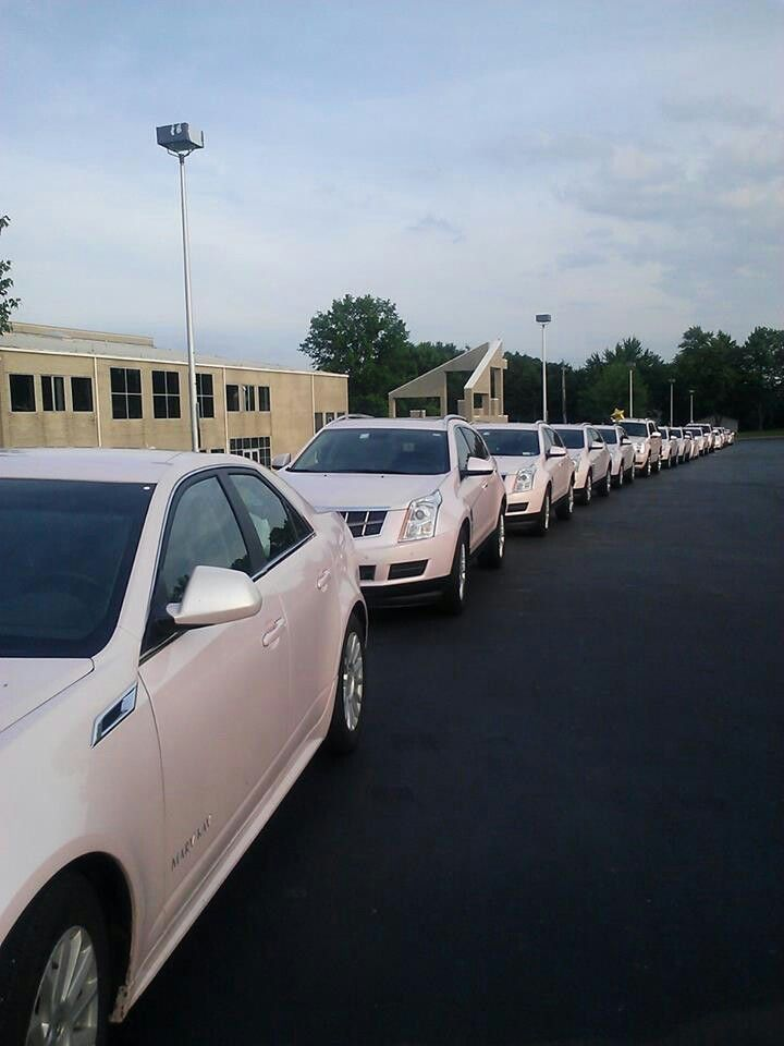 How Many Pink Cadillacs Can You Count Mary Kay