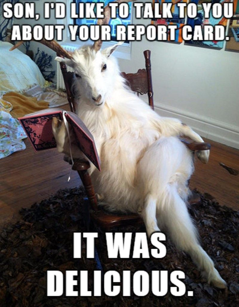 Dad Ate My Homework Goats Funny Funny Animal Pictures Animal Memes