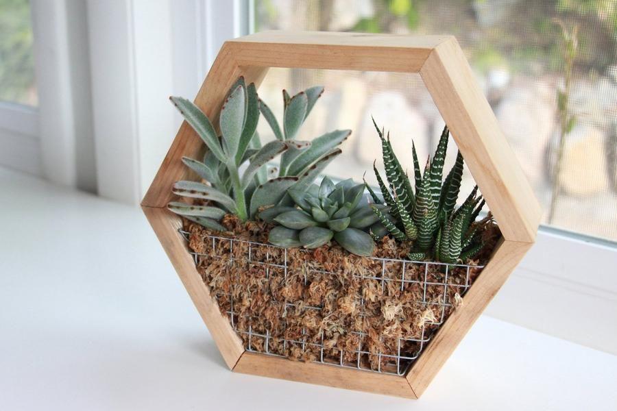 Diy hexagon succulent planter kit succulent planter