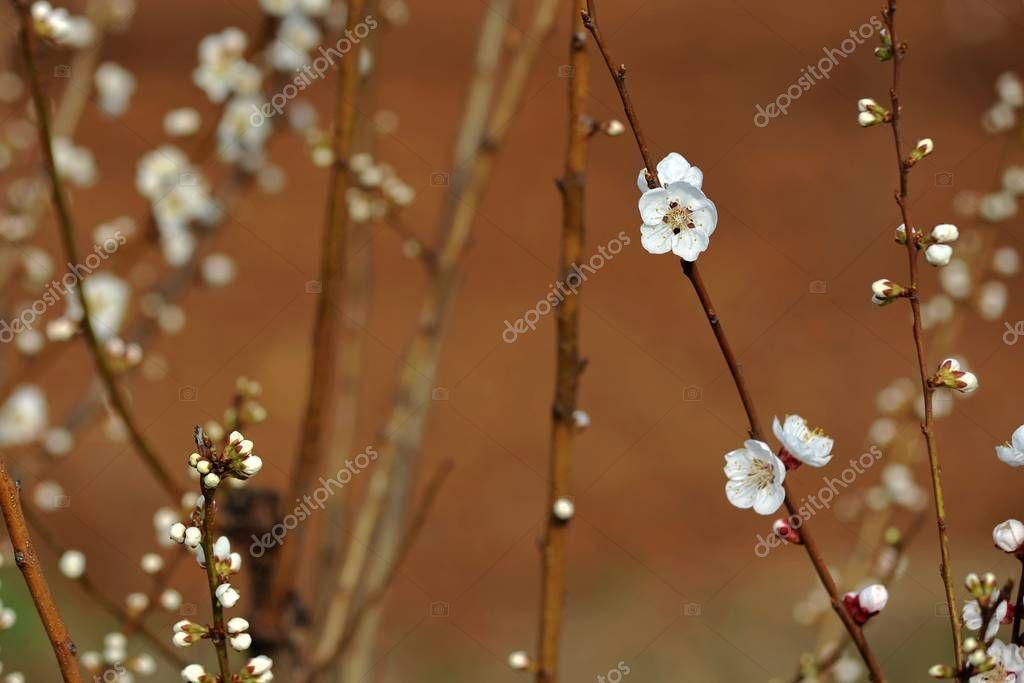 View Cherry Tree Bloom - Stock Photo , #SPONSORED, #Tree, #Cherry, #View, #Photo #AD