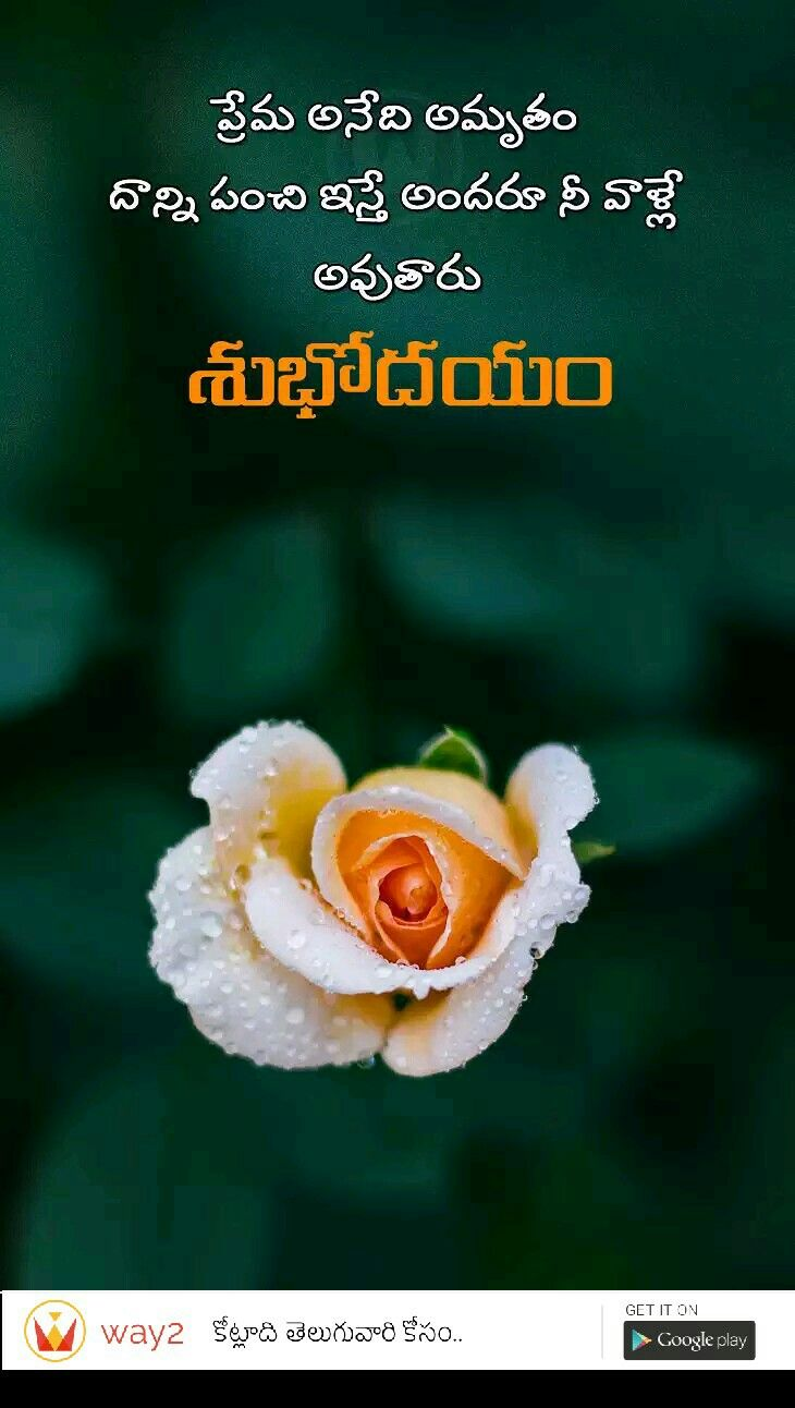 Pin By Raviteja Singer On Telugu Growing Sunflowers Quotes How To Get