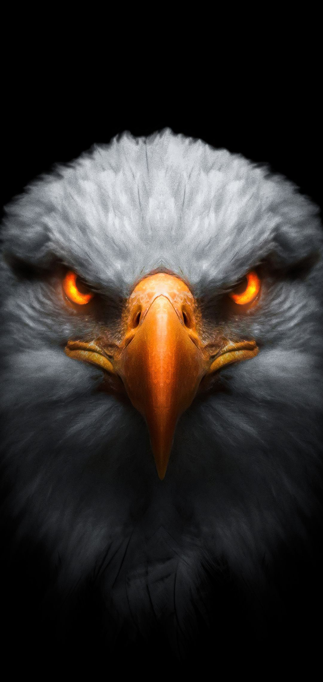 Eagle Red Glowing Eyes In 1080x2280 Resolution Eagle Wallpaper Eagle Images Eagle Pictures Eagle bird full hd wallpapers