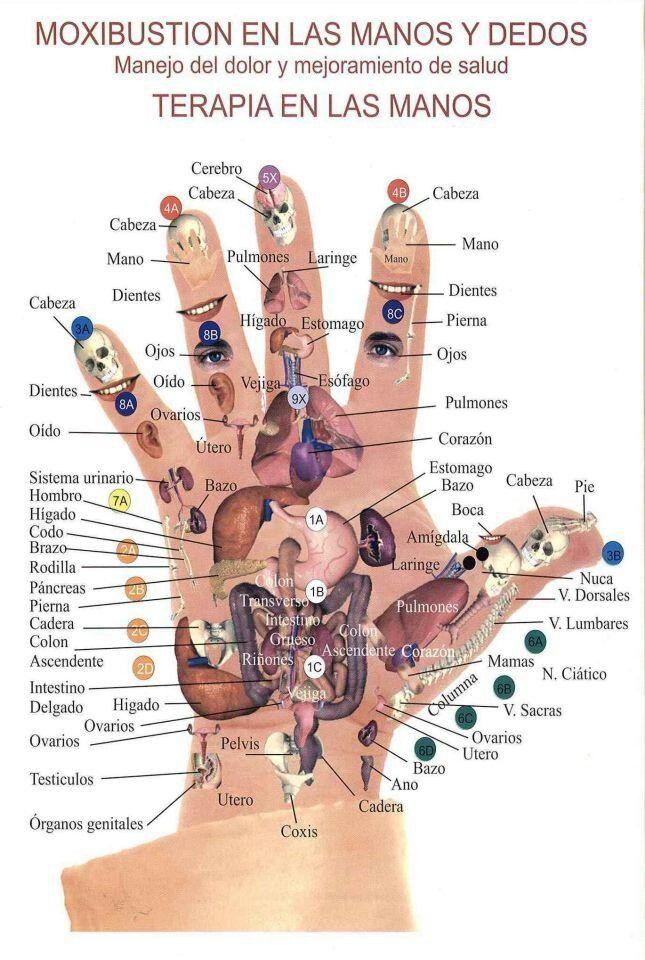 Reflexologia | Masajes | Pinterest | Tratamientos naturales ...