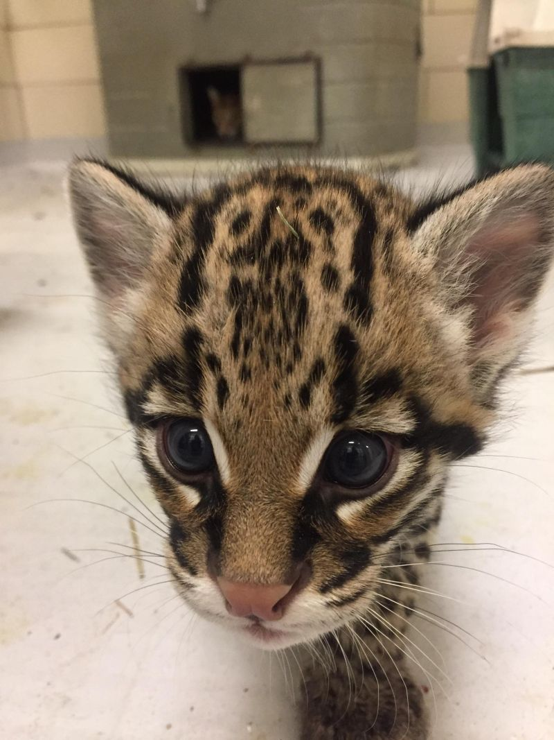 Zooborns Animal Photography Baby Animals Pictures Wild Cats
