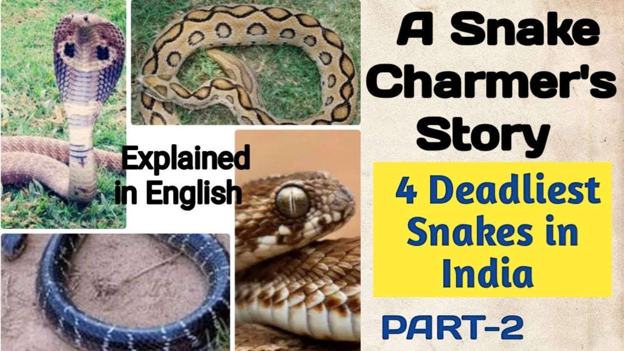 Ncert Class 5 Evs Chapter 2 A Snake Charmer S Story English Explanation Snake Charmer Charmer How To Memorize Things
