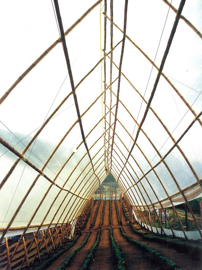 10m Long Guaduas Anchored On The Ground To Produce 8m Spans For Greenhouses 2 Bamboo Construction Bamboo Architecture Bamboo Design