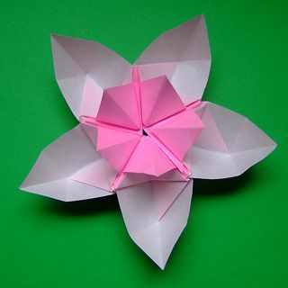 Photo of origami lotus or origami cherry blossom – kirschblüte 4 | Flickr – Photo Sharin…
