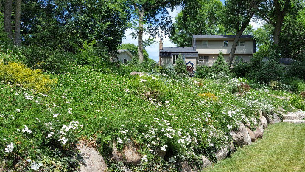 PT 705 Xeriscape Lawn Alternative Lawn care companies
