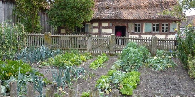 How Much Do I Plant?   Backyard garden, Backyard fences ...