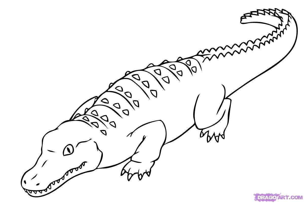 How To Draw An Alligator By Dawn Dinosaur Coloring Pages Animal