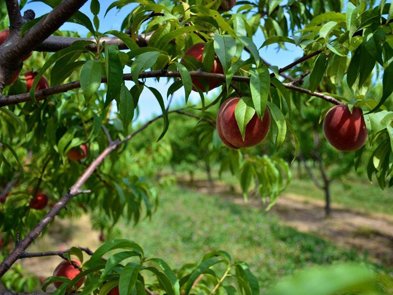 Produce Picking at Garden Patch Farms | Chicago - DailyCandy | To Do ...