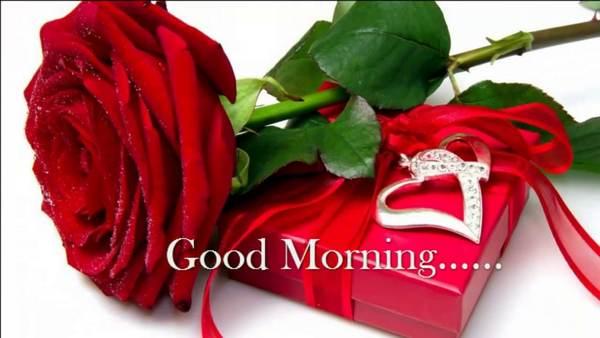 Good Morning Rose Pics Download Good Morning Roses Good Morning Rose Images Good Morning Flowers