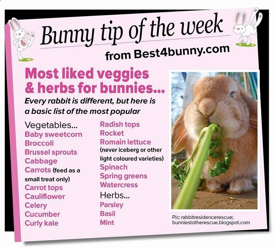 Pets Care Bunny tip of the week Most liked vegetables
