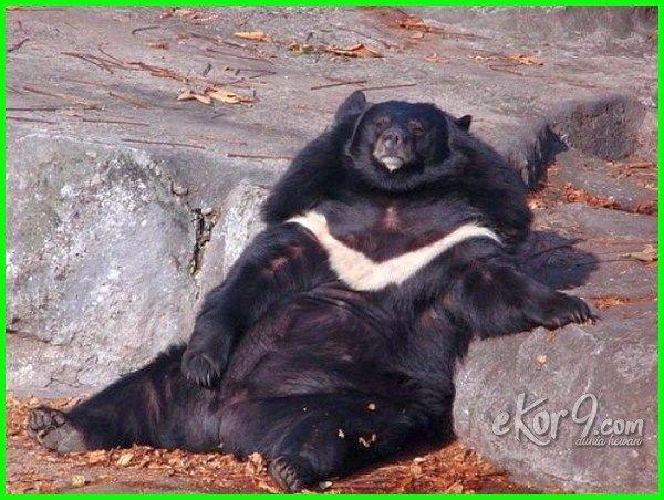 12 Gambar Hewan Berbadan Gemuk Karena Obesitas Lucu Atau Prihatin Dunia Fauna Hewan Binatang Tumbuhan Hewan Lucu Binatang