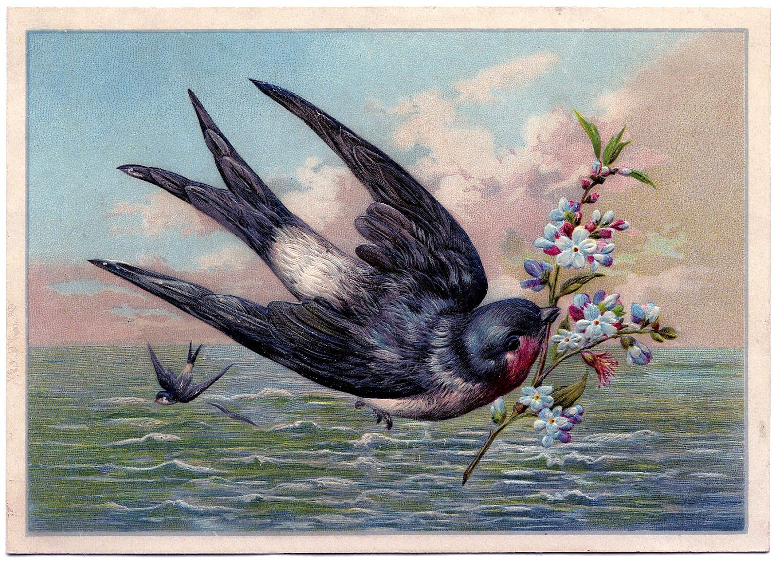 SwallowOcean-GraphicsFairy1.jpg 1.600×1.158 piksel