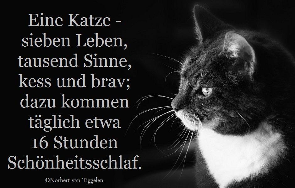 Katze Van Tiggelen Gedichte Menschen Leben Weisheit