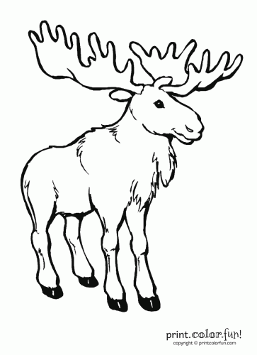 Moose I Can Draw This Coloring Pages For Kids Coloring Pages Animal Coloring Pages