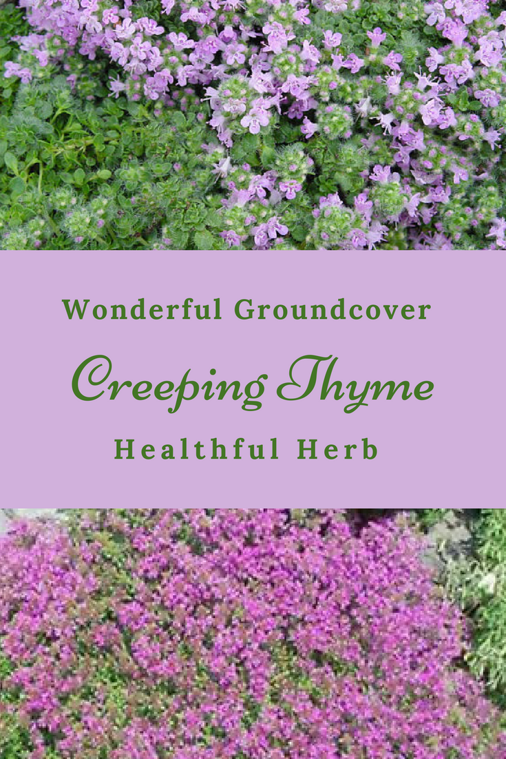 I Love Creeping Thyme It S Thick Enough It Will Choke Out Pesky Weeds Making It A Wonderful Plant Fo Growing Herbs Indoors Edible Garden Planting Vegetables