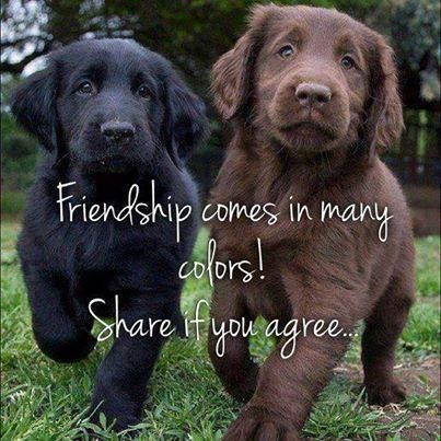 Pin By Terry Boland On Bow Wow With Images Baby Dogs Cute Animals Cute Dogs