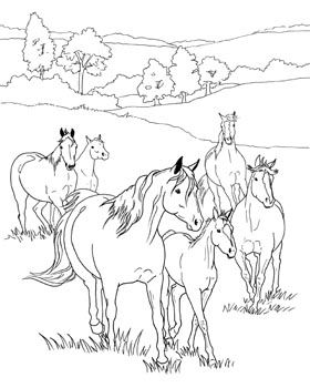 field of horses coloring sheet