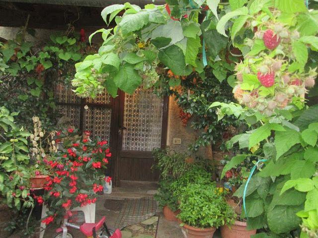 dal mio terrazzo   Foto di fiori, Fiori, Terrazzo