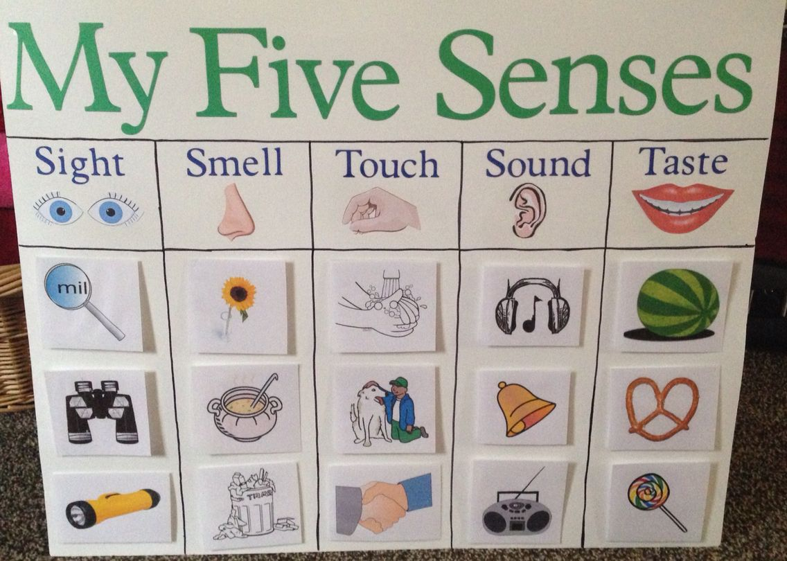 My Five Senses Board For Kindergarten Classifying Objects