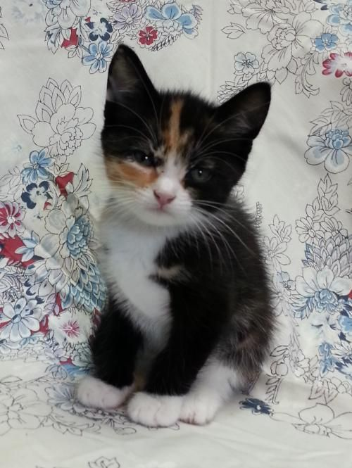 No Longer Listed Meet Monica 22560 A Petfinder Adoptable