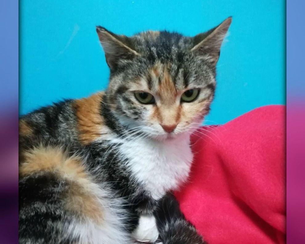 Genova ADOZIONE URGENTE PER NINA, MICINA DOLCISSIMA regalo gattini  gatti