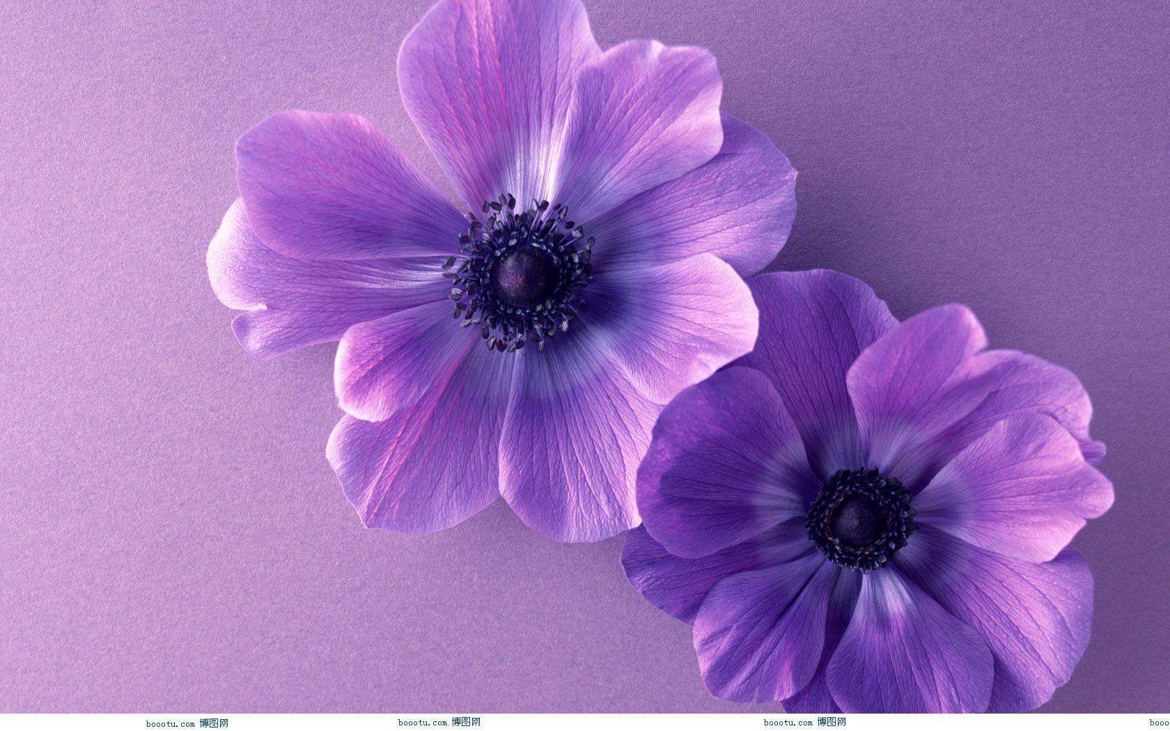 Image detail for Cute Flower Wallpaper 1680X1050