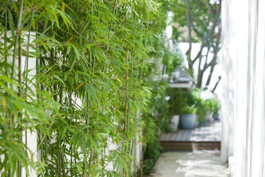 Dos jardines peque os y modernos con pileta tacuara for Pileta jardin pequeno