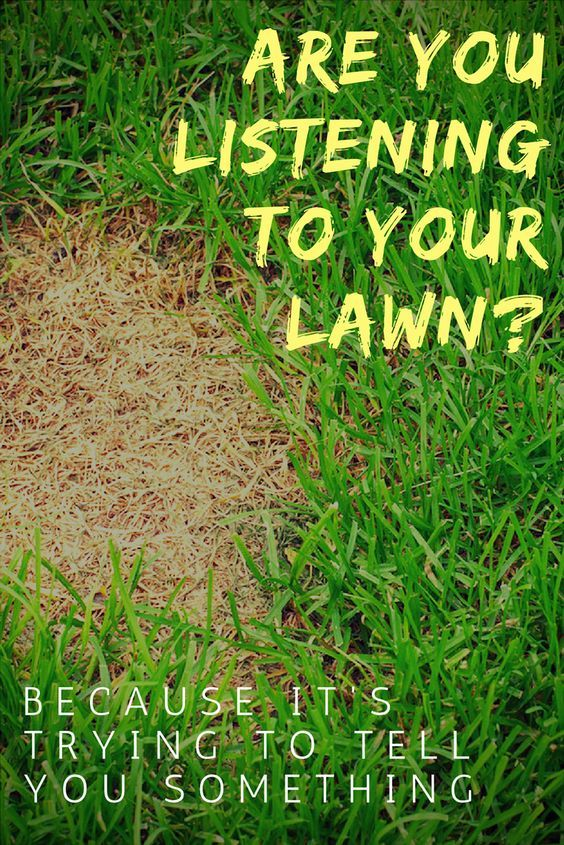 7 Things Your Lawn May Be Trying To Tell You Lawn Care Lawn Problems Lawn Maintenance