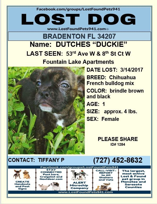 Have You Seen Duckie Lostdog Puppy Chihuahua Frenchbulldog