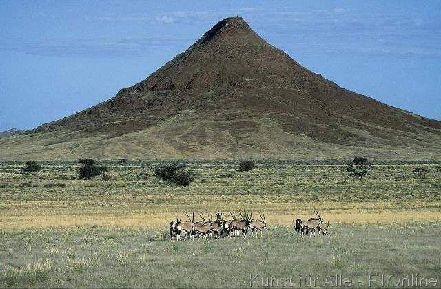 Oryx Antilopen Namibia Säugetier Herde Namibia Afrika afrikanisch Kaokoveld wild freilebend Steppe Oryx-Antilopen Steppe Savanne