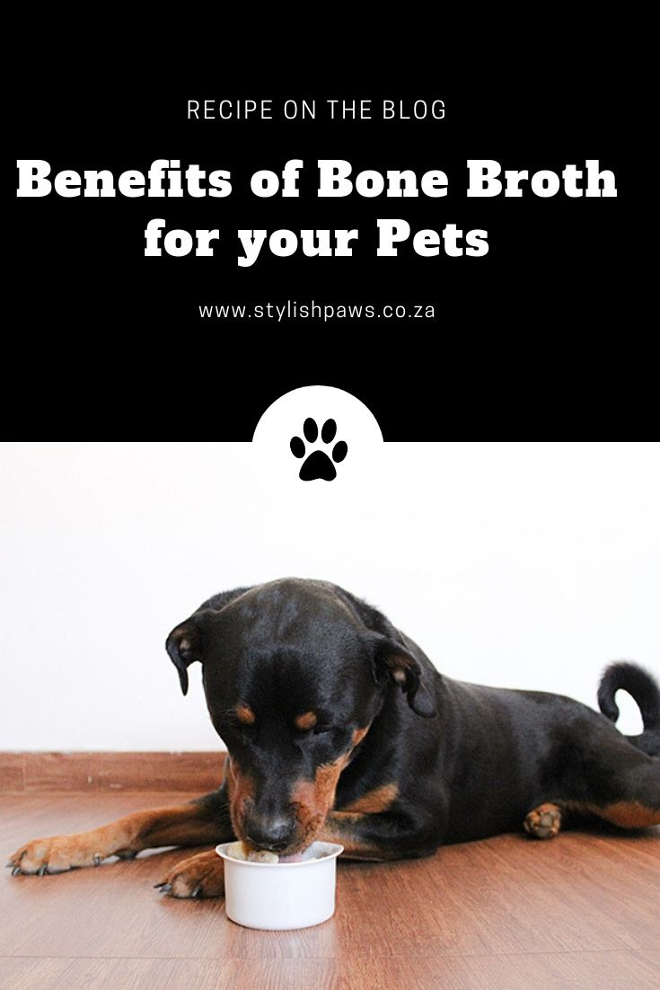 Benefits Of Bone Broth For Your Pets Pets Your Pet Pet Treats