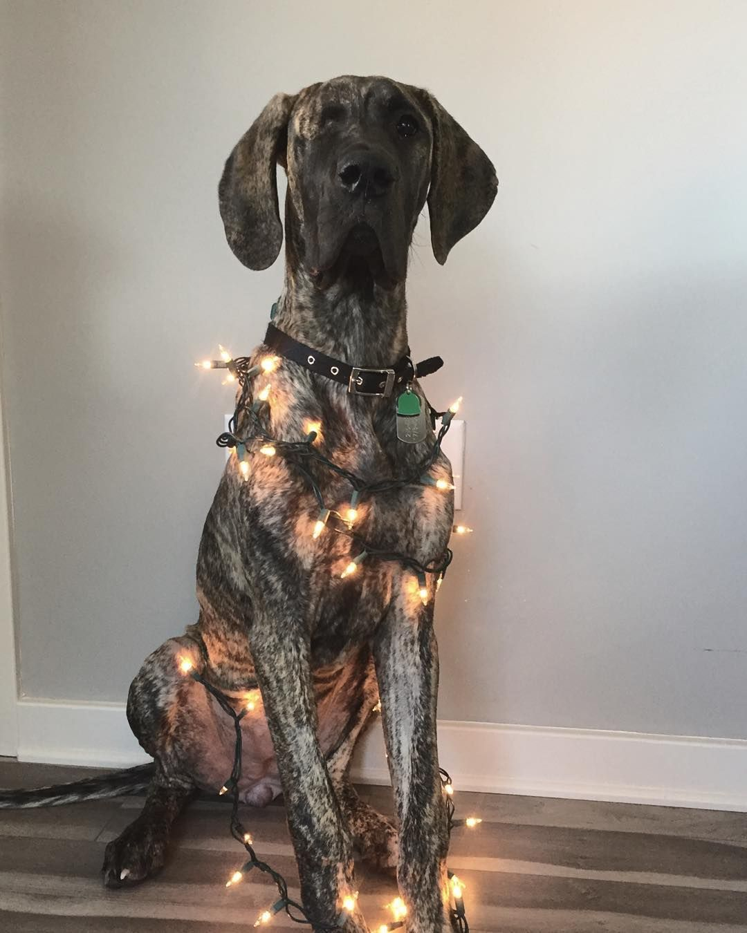 """""""Helping"""" Take Down Christmas Decorations . Happy New Year"""
