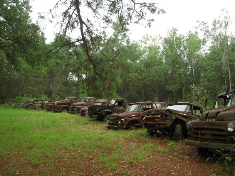 Abandoned Ford Trucks