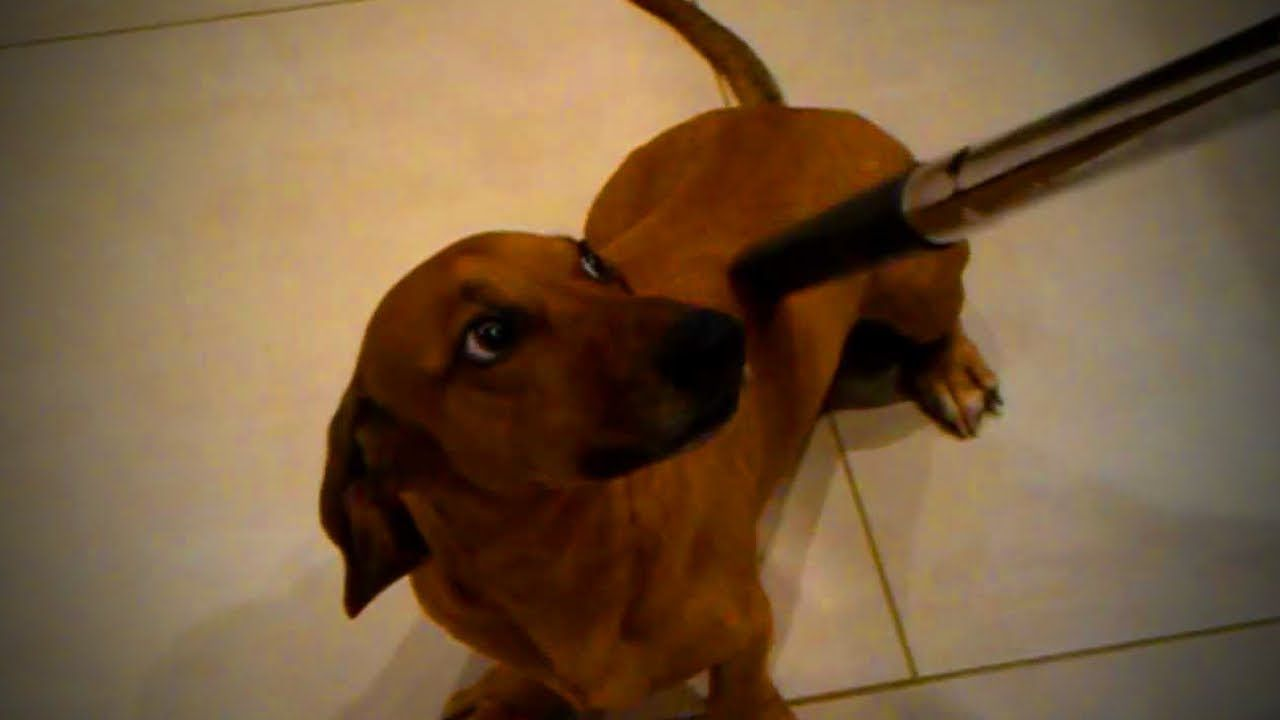 Dogs Vs Vacuum Funny Dog S Reactions To Vacuum Part 2