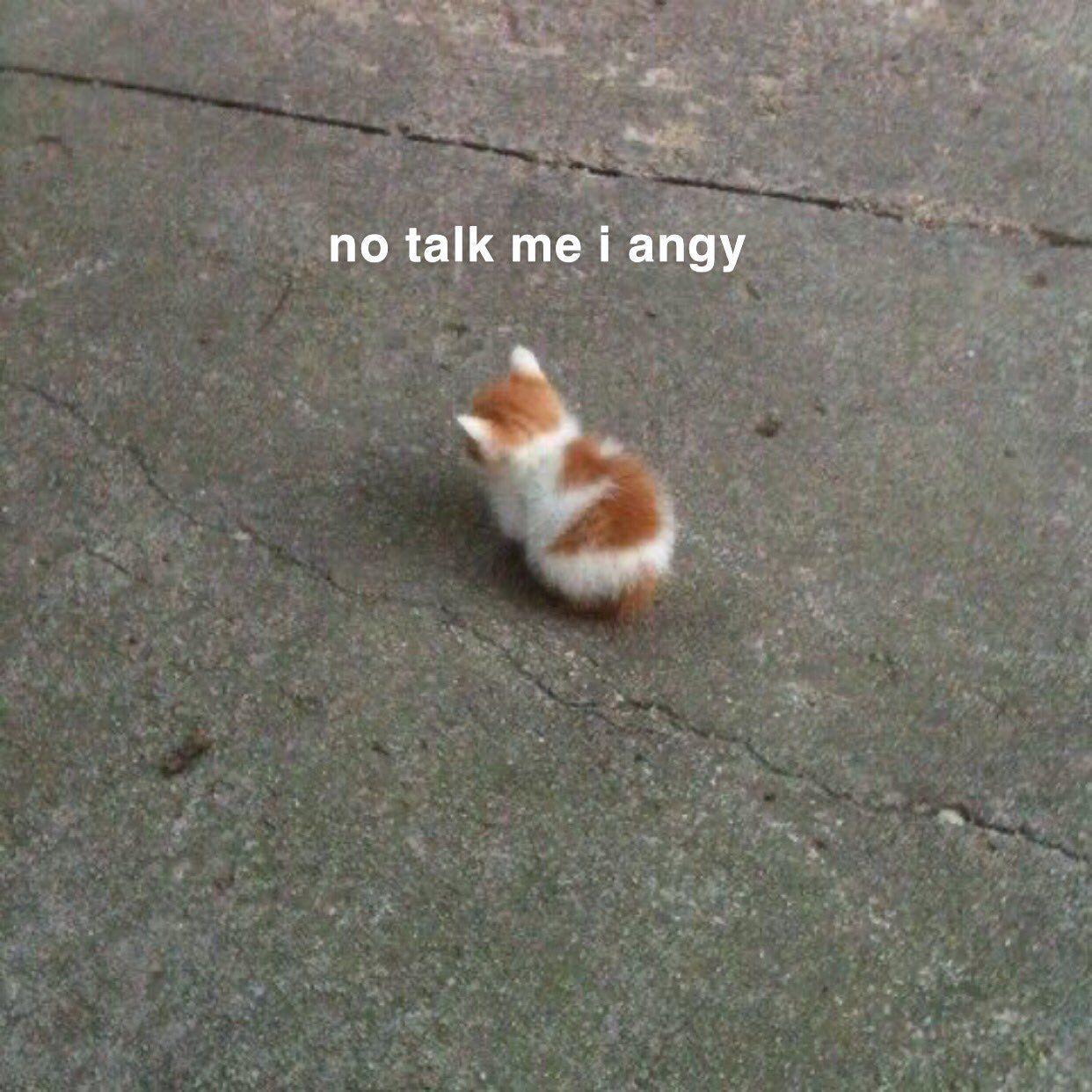 Animqls On Twitter Memes Funny Faces Cat Memes Cute Cat Memes