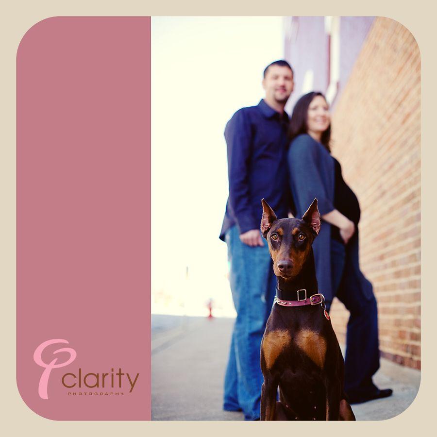 Maternity Shoot With A Pup Doberman Pinscher Maternity