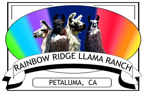 RAINBOW RIDGE LLAMA RANCH - Quality llamas for sale, stud service