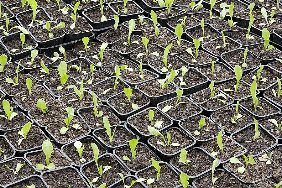 Les bonnes périodes de semis et de récoltes Calendrier