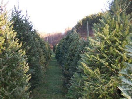 Bakersfield Christmas Tree Farm Bakersfield Vt Christmas Tree Farm Tree Farms Farm