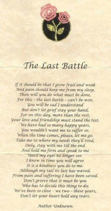 Lovely prayer for the last moments with a pet     this