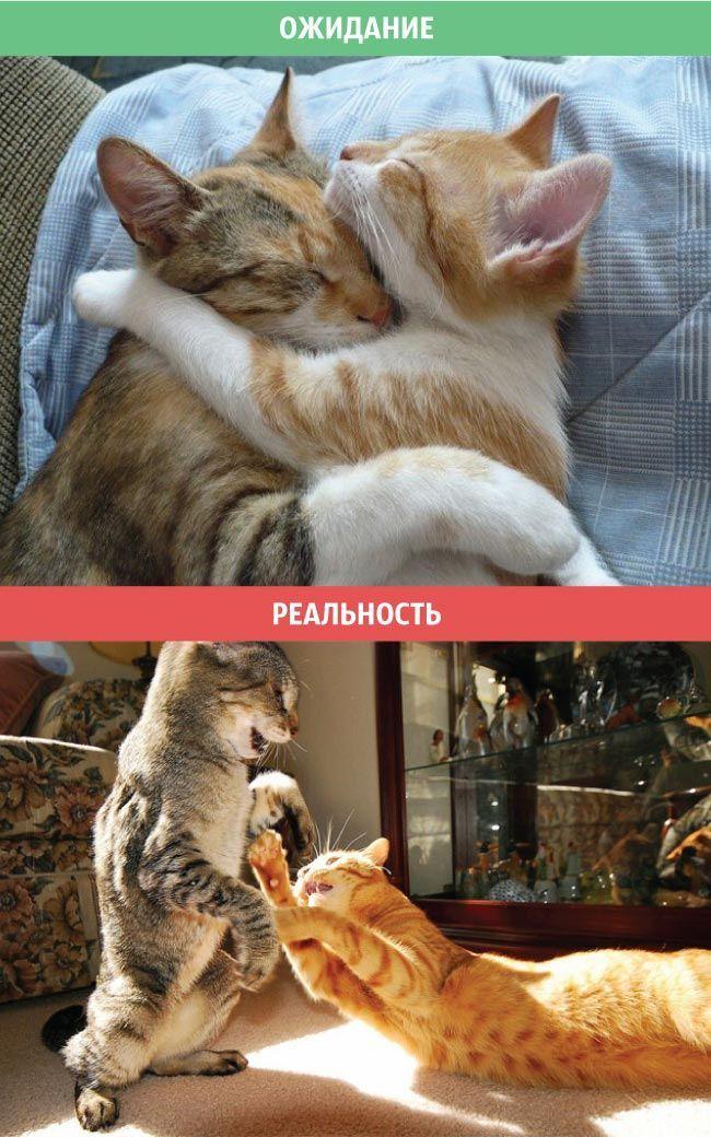 Открытка, приколы про котов с картинками