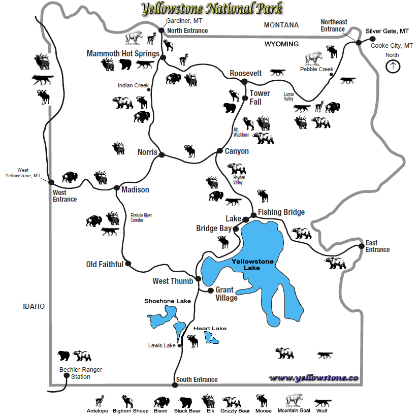 Yellowstone Animal Map - NPS Image | Yellowstone and Sights ... on madison yellowstone map, bridge bay yellowstone map, roosevelt yellowstone map, mammoth hotel yellowstone map, cody yellowstone map, tower falls yellowstone map, grand teton yellowstone map, vintage yellowstone map, printable yellowstone map, west yellowstone city map, fishing bridge yellowstone map, canyon yellowstone map, west thumb yellowstone map, north yellowstone map, gibbon river yellowstone map, detailed yellowstone map, lake yellowstone map, wyoming yellowstone map, yellowstone national park map, mammoth springs yellowstone map,