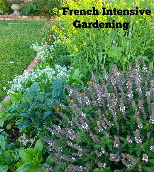 urban farm intensive gardening successive planting French