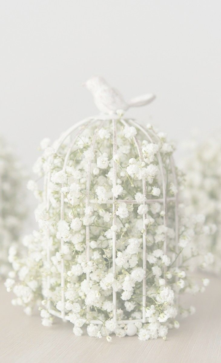 ana rosa - white bird cage with white babies breath | White Country ...